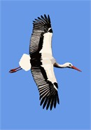 A stork in the sky