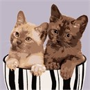Two kittens in a striped ceramic bowl