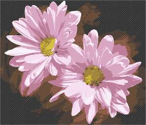 Twin pink daisies, opening up their delicate petals to soak up more sun.