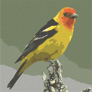 A clear look at a male Western Tanager is like looking at a flame: an orange-red head, brilliant yellow body, and coal-black wings. Although they don't typically eat seeds, Western Tanagers may eat dried fruit, freshly cut oranges, and other fresh fruit at bird feeders. If you live in a wooded area within this bird's range, providing moving water or a birdbath or pond may help attract them to your yard.