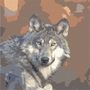 The gray wolf is native to the wilderness and remote areas of North America.